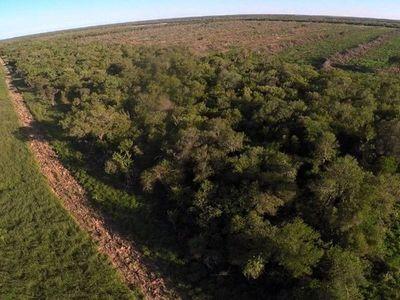En 20 años se perdieron más de 344.000 ha.  protegidas