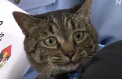 Policía japonesa rinde honores a un gato que salvó la vida de un anciano