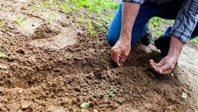 Esta asociación surgió para mejorar la productividad y buenas prácticas agrícolas y ganaderas