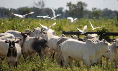 » Nueva Asociación de Productores Agropecuarios para un Chaco Sustentable