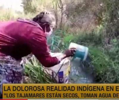 Indígenas del Chaco beben agua de charcos y no son asistidos por el Gobierno
