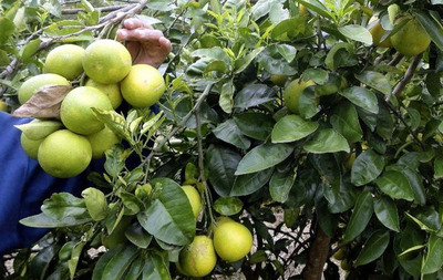 """Fiscal asegura que no imputó a vendedor por """"robar pomelos"""""""