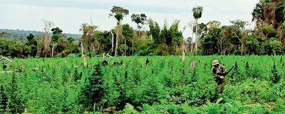 Se tumbaron 155 hectáreas en la reserva Morombí para cultivar marihuana