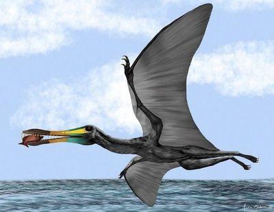 Colombia halla fósiles de reptil volador