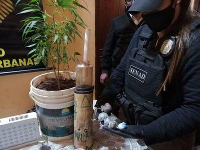 Luque: detención de distribuidor e incautación de cocaína y marihuana