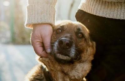 La razón por la que tu perro te persigue a todos lados