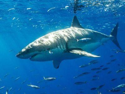 Surfista adolescente fallece tras el ataque de un tiburón blanco