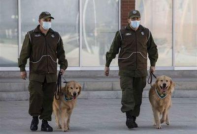 Policía chilena adiestra perros para intentar detectar a infectados de Covid-19