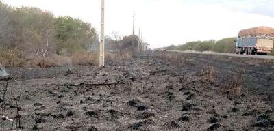 Mala práctica de ganaderos causa millonarias pérdidas a telefónicas