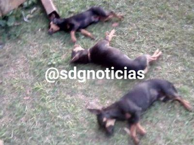 Denuncian que 3 perros fueron envenenados