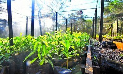 Más de 666 mil plantines de especies forestales y nativas se produjeron en vivero de Itaipú en el primer semestre