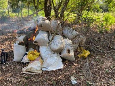 Senad destruyó 2.500 kilos de marihuana en el distrito de Karapaí
