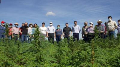 Productores de cannabis piden despolitizar cultivo de la planta